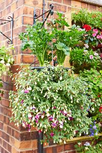 Irrigatia_Hanging Baskets
