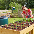 Using an Irrigatia SOL-C12 seep hose extension kit in a Vegtrug raised bed